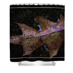 Shower Curtain featuring the photograph Frosted Oak by Tikvah's Hope