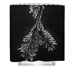 Frosted Pine Branch Shower Curtain