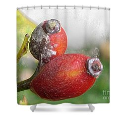 Shower Curtain featuring the photograph Frosted Rosehips by Nina Silver