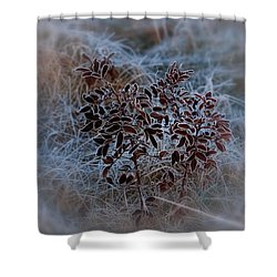 Frosted Rugosa Shower Curtain by Susan Capuano