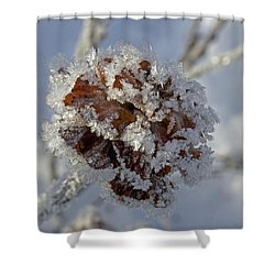 Frosted Willow Rose Shower Curtain