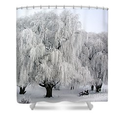 Frosted Willow Trees Shower Curtain