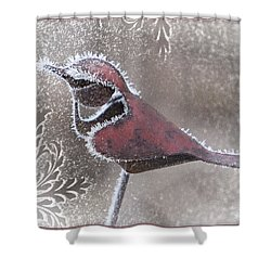 Shower Curtain featuring the photograph Frosty Cardinal by Patti Deters