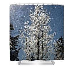 Frosty Colorado Aspen Shower Curtain