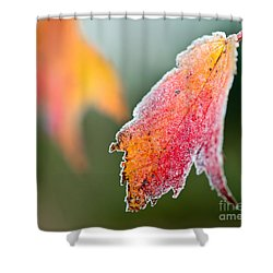 Frosty Leaf Shower Curtain