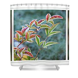 Frosty Leaves Shower Curtain by Gill Billington