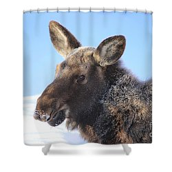 Frosty Moose Shower Curtain