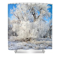 Frosty Morning Shower Curtain by Shane Bechler