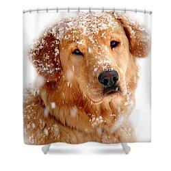 Frosty Mug Shower Curtain by Christina Rollo