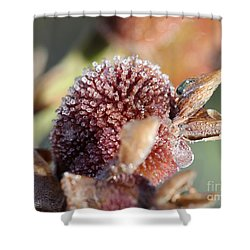 Frozen Dew Drops Melt From Canna Lily Seed Pods Shower Curtain by J McCombie