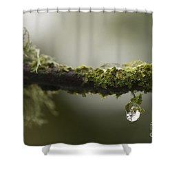 Frozen Droplet Shower Curtain by Anne Gilbert