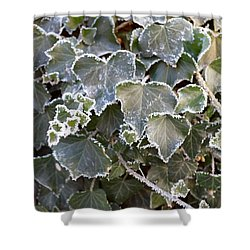 Shower Curtain featuring the painting Frozen Hedera Helix 2 by Felicia Tica