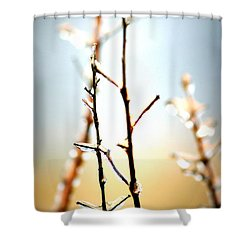 Frozen In Light Shower Curtain by Faith Williams