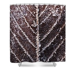 Frozen Leaf Shower Curtain by Anne Gilbert