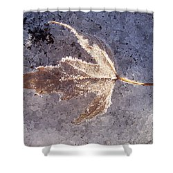 Frozen Leaf Shower Curtain by Richard Bryce and Family