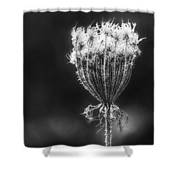 Shower Curtain featuring the photograph Frozen Queen by Melanie Lankford Photography