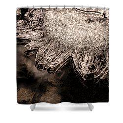 Frozen Sun Shower Curtain by LeeAnn McLaneGoetz McLaneGoetzStudioLLCcom