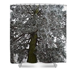 Shower Curtain featuring the photograph Frozen Tree 2 by Felicia Tica