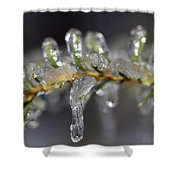 Frozen Yew Shower Curtain