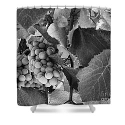 Fruit -grapes In Black And White - Luther Fine Art Shower Curtain