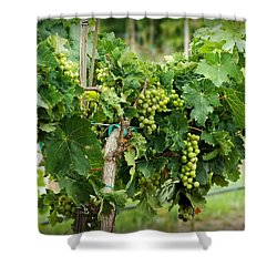 Fruit On The Vine Shower Curtain by Lucinda Walter