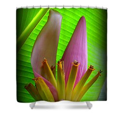 Fruits Ready Shower Curtain
