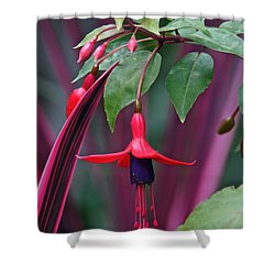 Fuchsia Delight Shower Curtain