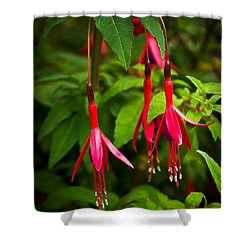 Fuchsia Flowers Shower Curtain by Jane McIlroy