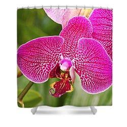 Fuchsia Moth Orchid Shower Curtain