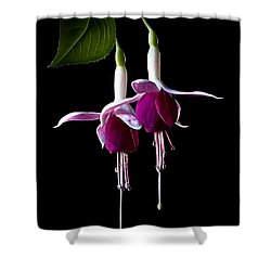 Fuchsias Shower Curtain