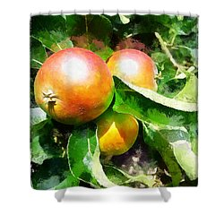 Fugly Manor Apples Shower Curtain