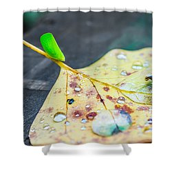 Shower Curtain featuring the photograph Fulgoroidea On A Leaf by Rob Sellers