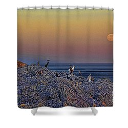 Full Moon Gathering Of Capricorn Shower Curtain