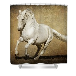 Full Steam Ahead Shower Curtain by Wes and Dotty Weber