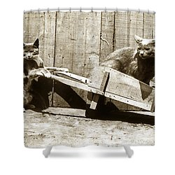 Shower Curtain featuring the photograph Fun With Cats Henry King Nourse Photographer Circa 1900 by California Views Mr Pat Hathaway Archives