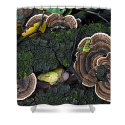 Fungi Contrast Shower Curtain