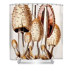 Fungi Shower Curtain by English School