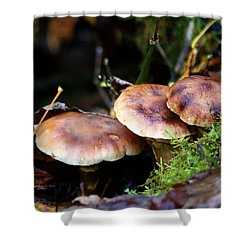 Fungus Among Us II Shower Curtain by Jeanette C Landstrom