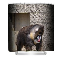 Funny Face Shower Curtain by Sara  Raber