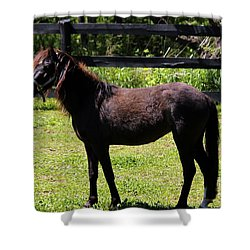 Furry Pony Shower Curtain
