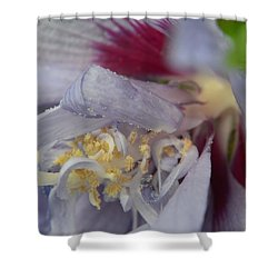 Fuscia Shower Curtain