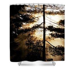 Fv5423, Perry Mastrovito Sunrise Though Shower Curtain by Perry Mastrovito