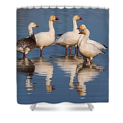 Gaggle Of Snow Geese Reflected Shower Curtain