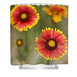 Gaillardia 'arizona Sun' Shower Curtain