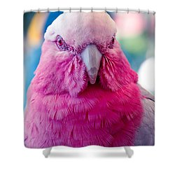 Galah - Eolophus Roseicapilla - Pink And Grey - Roseate Cockatoo Maui Hawaii Shower Curtain by Sharon Mau