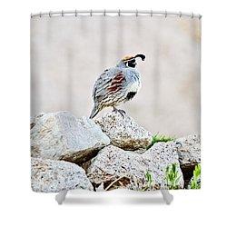 Gambel's Quail Shower Curtain by Scott Pellegrin