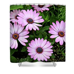 Garden Beauty Shower Curtain by Ed  Riche