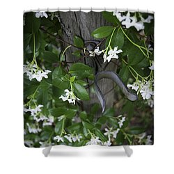 Garden Gate Shower Curtain by Judy Hall-Folde
