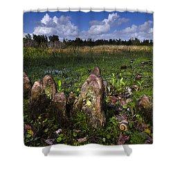 Garden In The Glades Shower Curtain by Debra and Dave Vanderlaan