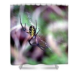 Garden Spider Shower Curtain by Deena Stoddard